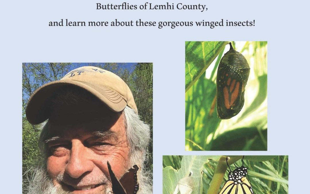 Butterflies of Lemhi County Program: Thursday, June 3rd at 6:30pm at the Sacajawea Learning Center