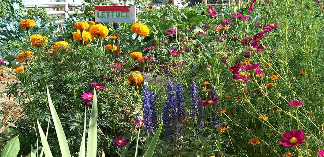 community-heritage-garden-1